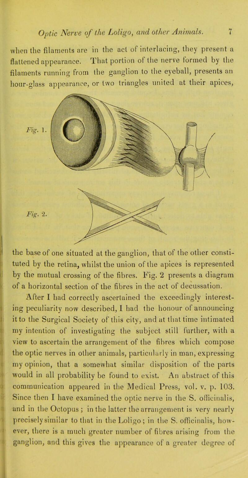when the filaments are in the act of interlacing, they present a flattened appearance. That portion of the nerve formed by the filaments running from the ganglion to the eyeball, presents an hour-glass appearance, or two triangles united at their apices, 1 the base of one situated at the ganglion, that of the other consti- ■ tuted by the retina, whilst the union of the apices is represented ( by the mutual crossing of the fibres. Fig. 2 presents a diagram !' of a horizontal section of the fibres in the act of decussation. After I had correctly ascertained the exceedingly interest- n ing peculiarity now described, I had the honour of announcing ) it to the Surgical Society of this city, and at that time intimated my intention of investigating the subject still further, with a I view to ascertain the arrangement of the fibres which compose 1 the optic nerves in other animals, particularly in man, expressing ! my opinion, that a somewhat similar disposition of the parts . would in all probability be found to exist. An abstract of this ) communication appeared in the Medical Press, vol. v. p. 103. ' Since then I have examined the optic nerve in the S. officinalis, and in the Octopus ; in the latter the arrangement is very nearly preciselysimilar to that in the Loligo; in the S. officinalis, how- ever, there is a much greater number of fibres arising from the ganglion, and this gives the appearance of a greater degree of