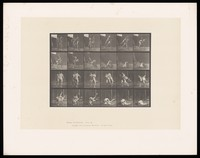 view Two men wrestling. Collotype after Eadweard Muybridge, 1887.