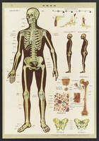 view Human anatomy and physiology: western ideas presented for the education of Chinese medical staff. Colour lithographs, 1956.
