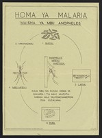 view The life cycle of the mosquito that causes malaria fever. Colour lithograph by the Division of Health Education, ca, 2000.