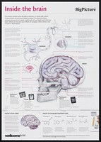 view Inside the brain / Wellcome Trust.