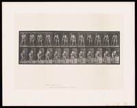 view A naked man bends slightly, moving a scythe to and fro in front of him. Collotype after Eadweard Muybridge, 1887.