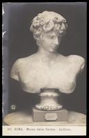 view Antinous. Photographic postcard, 192-.
