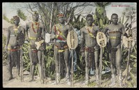 view Five Zulu men standing in a line holding shields. Colour process print, ca. 1909.