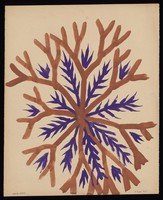 view An outgrowth with alternating brown branches and purple spikes. Watercolour by M. Bishop, 1968.
