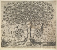 view A great cedar tree representing the Catholic church, contrasted with two smaller trees representing later denominations. Engraving after W. Cave, ca. 1675.