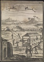 view Sugar: a plantation of sugar cane with processing equipment in the foreground. Engraving.