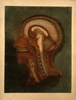 view Head and neck: sagittal section. Colour mezzotint by J.F. Gautier d'Agoty, 1748.
