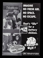 """view Imagine no fresh air. No space. No escape : That's """"life"""" for a battery chicken : chicken out!"""
