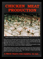 view Chicken meat production... : a price that's too painful to pay...