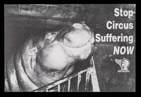 view Stop circus suffering now