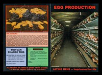 view Egg production : laying hens: imprisoned for life