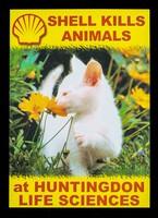 view Shell kills animals at Huntingdon Life sciences / SHAC.
