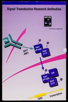 view Signal transduction research antibodies / Santa Cruz Biotechnology, Inc.