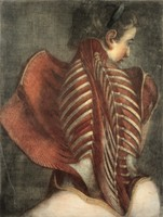 view Muscles of the back: partial dissection of a seated woman, showing the bones and muscles of the back and shoulder. Colour mezzotint by J. F. Gautier d'Agoty, 1745/1746.