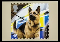 view Police dog : 48