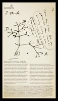 view Darwin : Darwin's tree of life / words: Dorothy Porter.
