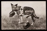 view Le chien sanitaire ... et patriote ! / Édition Lorraine.
