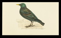 view Trandate tablets : starling.