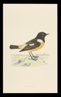 view Trandate tablets : stonechat.