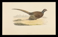 view Trandate tablets : pheasant.